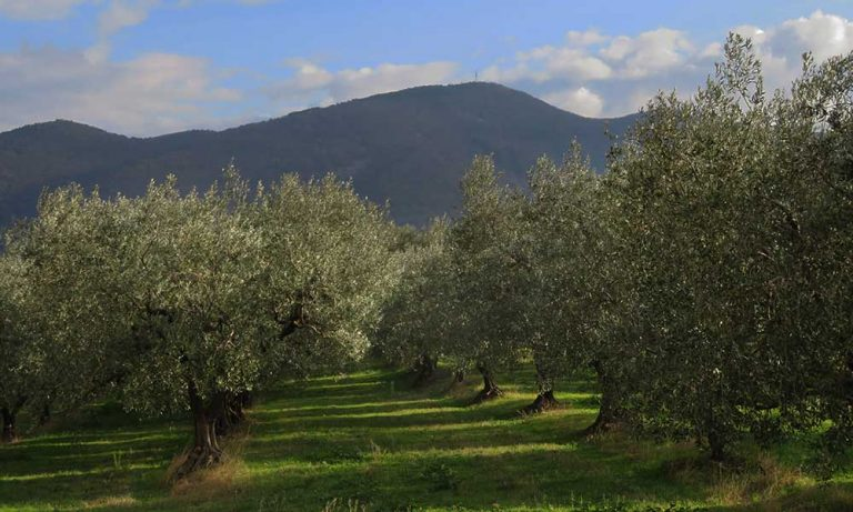Nyons olijfgaard