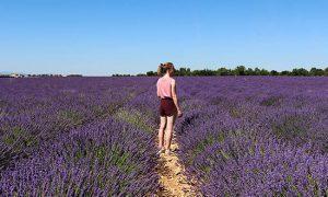 Tips voor een bezoek aan de lavendelvelden van Valensole